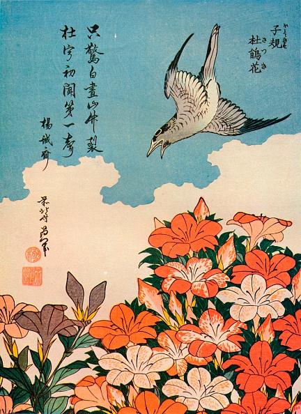 植物「Hototogisu satsuki (Cuckoo and Azalea), c1828, (1936). Artist: Hokusai」:写真・画像(10)[壁紙.com]