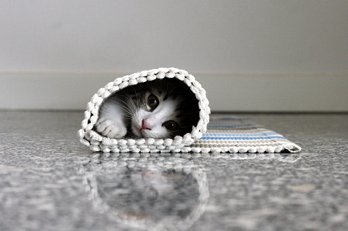子猫「Kitten hidden in rolled up carpet」:スマホ壁紙(9)