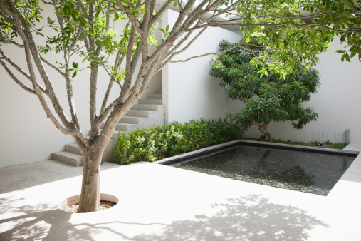 Shadow「Tree and pool in courtyard」:スマホ壁紙(17)