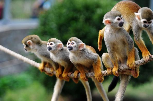 Squirrel「Squirrel Monkeys Welcome Mid-Autumn Festival In Qingdao」:写真・画像(19)[壁紙.com]