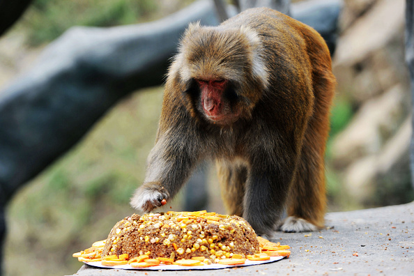 Squirrel「Squirrel Monkeys Welcome Mid-Autumn Festival In Qingdao」:写真・画像(11)[壁紙.com]