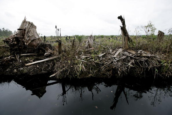 Seasoning「Deforestation Continues In Sumatra」:写真・画像(5)[壁紙.com]