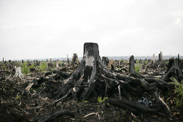 Tropical Rainforest「Deforestation Continues In Sumatra」:写真・画像(0)[壁紙.com]