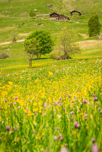 夏「スイス アルプス夏の草原」:スマホ壁紙(10)