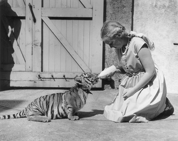 Big Cat「Tiger Milk」:写真・画像(18)[壁紙.com]