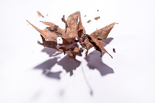 秋「Autumn leaf exploding」:スマホ壁紙(14)