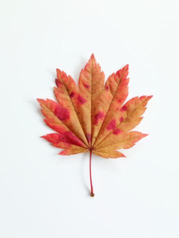 紅葉「autumn leaf」:スマホ壁紙(0)
