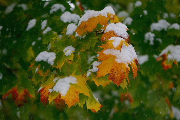 Leaf「Winter Hits Germany」:写真・画像(10)[壁紙.com]