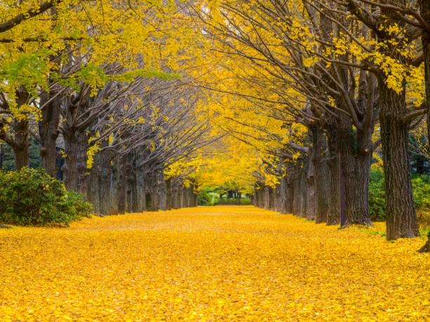秋のリーフ :スマホ壁紙(壁紙.com)