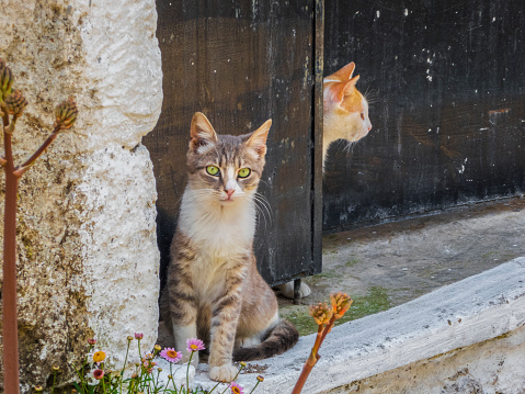 子猫「Kittens in Doorway with Wildflowers in Greece」:スマホ壁紙(3)