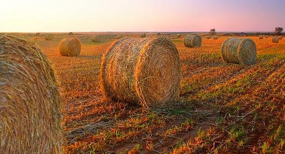Sportsperson「Bales of hay in countryside」:スマホ壁紙(11)