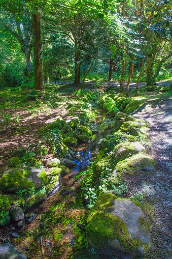 The Nature Conservancy「Stream near Killarney, Ireland」:スマホ壁紙(12)