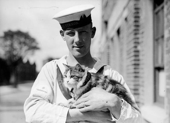 キャラクター「Ship's Cat」:写真・画像(10)[壁紙.com]