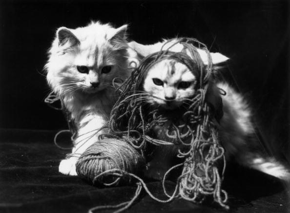 Kitten「Kitten Play」:写真・画像(15)[壁紙.com]