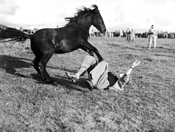 Fred Morley「Dartmoor Rodeo」:写真・画像(14)[壁紙.com]