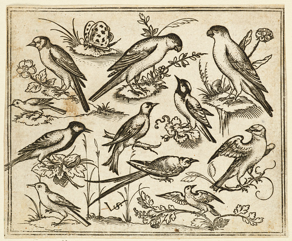 Etching「Eleven Birds Sitting On Patches Of Flowering Foliage And Small Branches」:写真・画像(0)[壁紙.com]