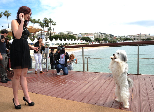 Stuart C「'Pudsey: The Movie' Photocall - The 66th Annual Cannes Film Festival」:写真・画像(1)[壁紙.com]