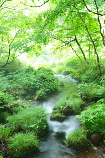 Japan「Limpid stream」:スマホ壁紙(4)