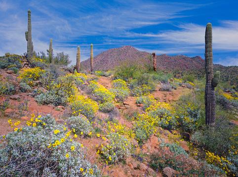 Wilderness Area「Arizona spring desert」:スマホ壁紙(9)