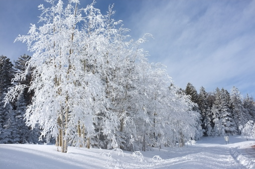 スキー「早朝雪で覆われた木」:スマホ壁紙(17)