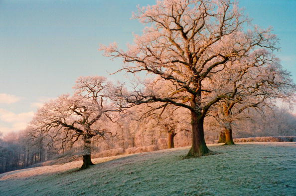 Tree「Frost Covered Trees, Oxfordshire, UK」:写真・画像(15)[壁紙.com]