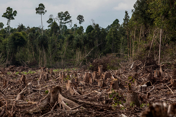 Amazon Rainforest「Indonesia's Deforestation Rate Becomes Highest In The World」:写真・画像(9)[壁紙.com]