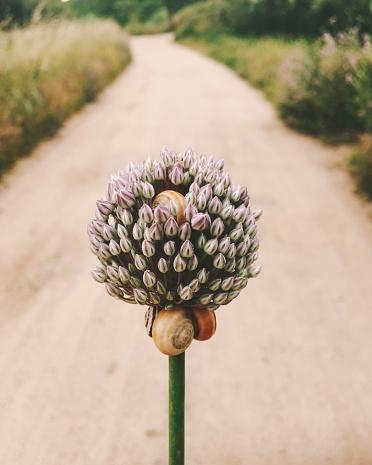 カタツムリ「Snails on a flower」:スマホ壁紙(3)