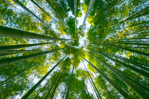 Woodland「Large bamboo forest in the woods」:スマホ壁紙(10)