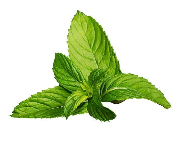Fresh mint leaves isolated on a white background:スマホ壁紙(壁紙.com)