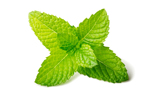 Leaf「Fresh mint leaf isolated on white」:スマホ壁紙(9)