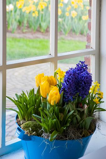 Keukenhof Gardens「Window with spring flower arrangement, Keukenhof, Lisse, Holland」:スマホ壁紙(9)