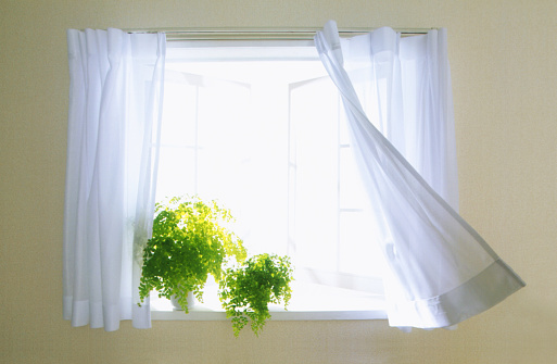 Window Sill「Window with potted plant and curtains in breeze」:スマホ壁紙(15)