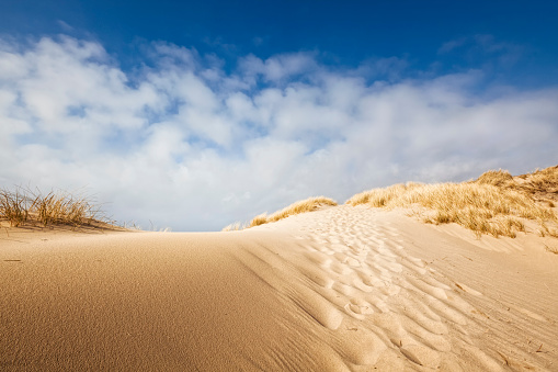 Hill「Sand dune on the coast of Sylt」:スマホ壁紙(14)