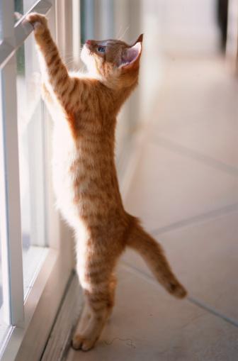Kitten「Kitten at French Doors」:スマホ壁紙(17)