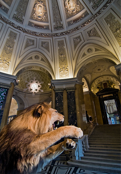 Stuffed「Vienna; Natural History Museum; Stuffed Lion In The Entrance Hall」:写真・画像(2)[壁紙.com]