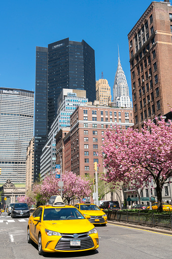 Vertical「Taxis run along the full-blossomed rows of cherry blossom trees at Park Avenue in Manhattan New York City. Grand Central Terminal, Chrysler Building and other Midtown Manhattan buildings surround the Avenue.」:スマホ壁紙(11)