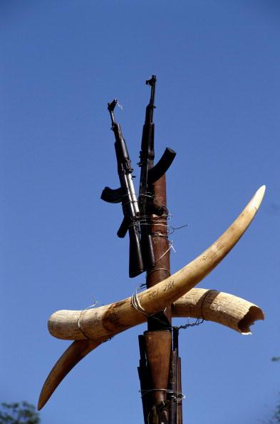Tom Stoddart Archive「Zambian Ivory Trade」:写真・画像(6)[壁紙.com]