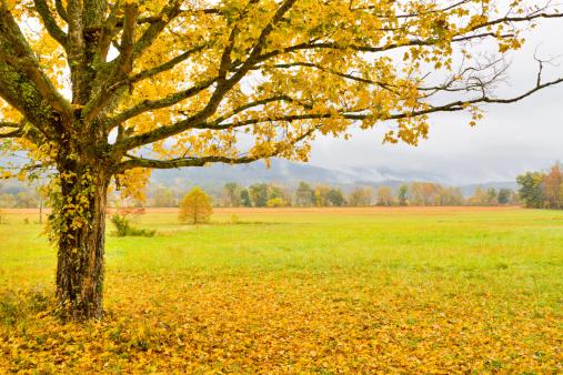 Cades Cove「Autumn Tree and Meadow」:スマホ壁紙(14)