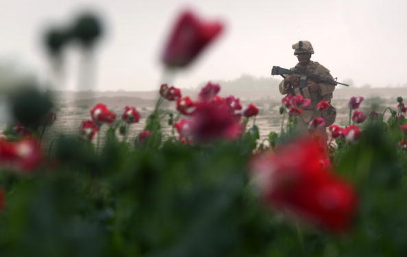 John Moore「Airdrop Of Military Supplies Falls On To Opium Poppy Field」:写真・画像(3)[壁紙.com]