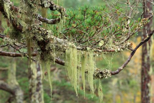 Frond「Lichens in the Scottish Highlands」:スマホ壁紙(0)