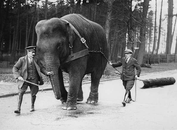 Log「Elephant Draws A Yul Tree Trunk」:写真・画像(18)[壁紙.com]