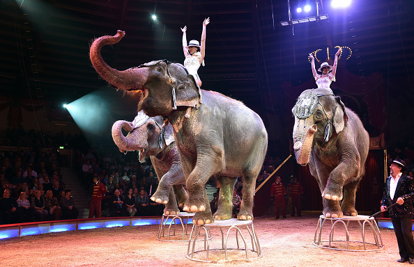 animal「Circus Krone Celebrates Premiere Of 'Tierisch gut'」:写真・画像(19)[壁紙.com]