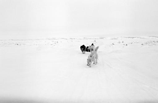Snow sled「Dog sled team」:スマホ壁紙(10)