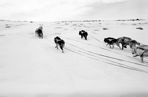 Dogsledding「Dog sled team」:スマホ壁紙(2)