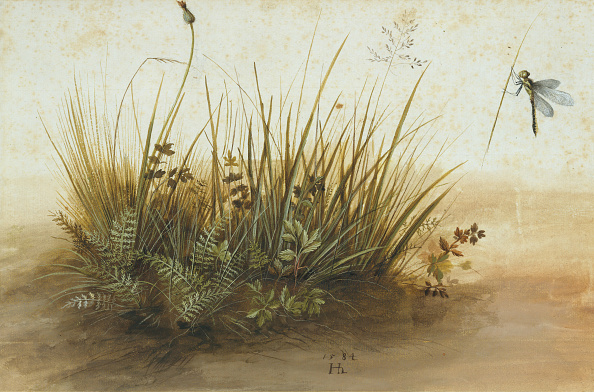 Grass「A Small Piece Of Turf」:写真・画像(11)[壁紙.com]