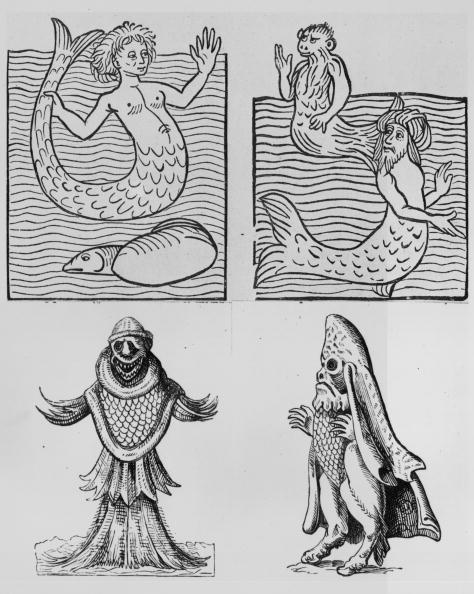 Fictional Character「Sea Creatures」:写真・画像(19)[壁紙.com]