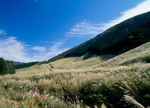 Japanese pampas grass「Pampas Grass Field of Sengokuhara, Hakone, Kanagawa, Japan」:スマホ壁紙(12)