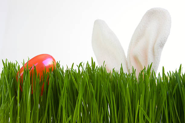 Bunny Ears Search for Easter Egg in Grass, on White:スマホ壁紙(壁紙.com)