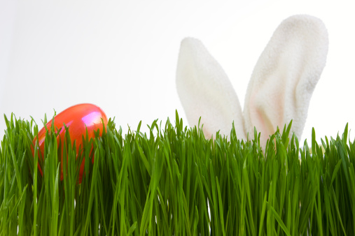 Easter Bunny「Bunny Ears Search for Easter Egg in Grass, on White」:スマホ壁紙(19)