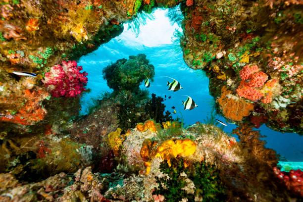 Moorish Ideols Zanclus cornutus in Blue Window with Colorful Frame, Raja Ampat, Indonesia:スマホ壁紙(壁紙.com)